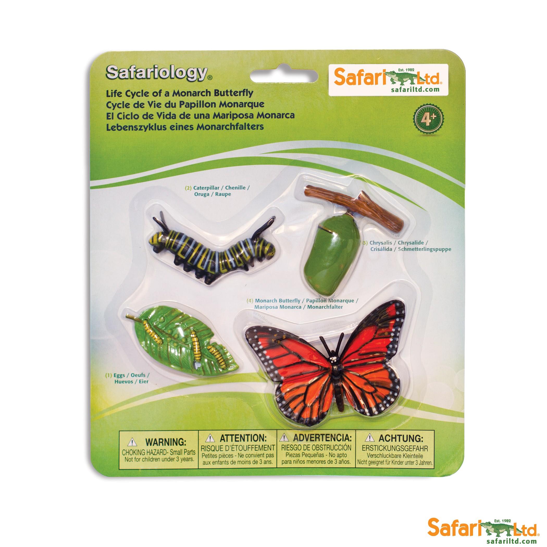 ciclo de la vida de una mariposa